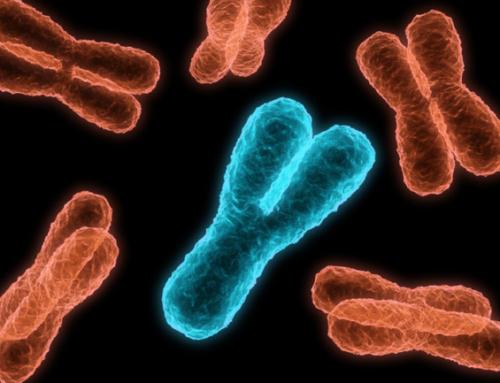Что ждет Y-хромосому в будущем?